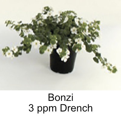 picture of plant treated with 3ppm Bonzai drench